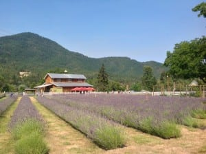 On the Road: Oregon Lavender in Bloom