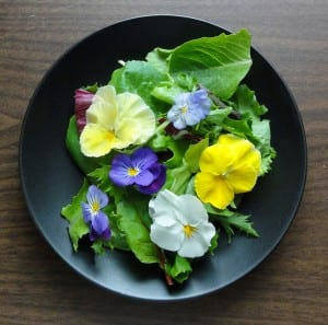 Edible Flowers Spring into Flavor