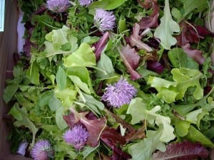 Summer Herb Salad with Baby Greens