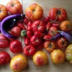 How to Save Your Bumper Tomato Crop