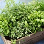 5 Easiest Herbs to Grow in Kitchen Gardens