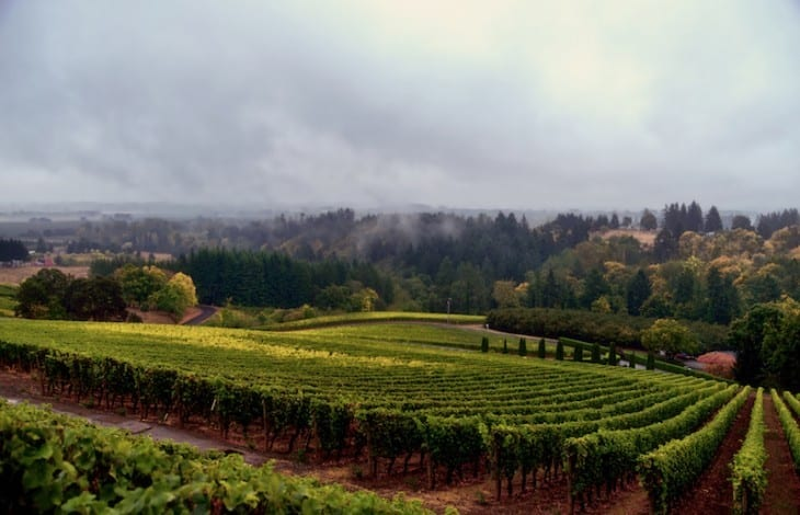 Willamette-Wine-Country-730x470