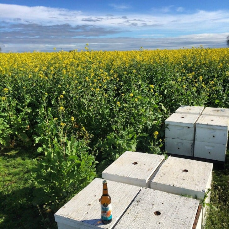 Nectar Creek Turnip field with bee hives