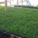 TerraSol Organics Sprouts a Growing Business