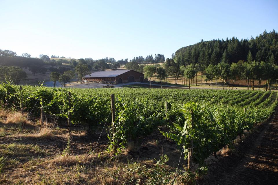 maysara winery