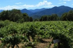Southern Oregon Wineries Thrive on 42nd Parallel