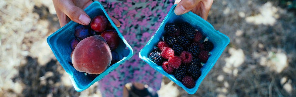 containers of fresh picked berries