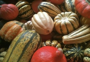 Fall Brings a Squash Bounty