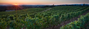 Willamette Wineries Closer than France, Better than Napa