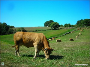 Eating Grass-Fed vs. Corn-Fed: Where's the Beef?